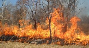 حريق يلتهم 700 دونم اعشاب جافة في وادي الريان