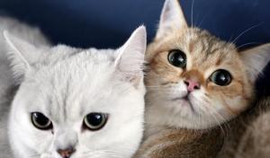 إنقاذ خمسمئة قطة بالصين قبل أن تتحول لوجبات