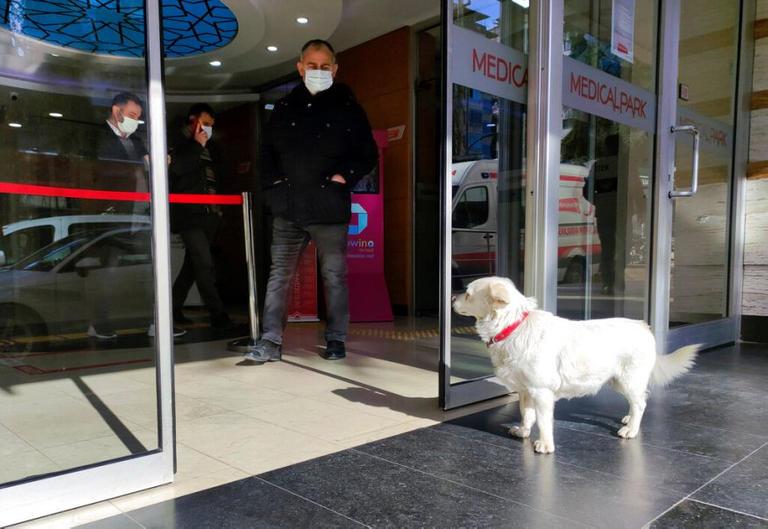 كلبة تنتظر صاحبها المريض أمام المستشفى 6 أيام Image