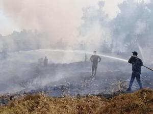 القبض على مفتعل حرائق في عجلون