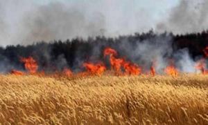 الدفاع المدني يحذر من اشعال الحرائق قرب الاعشاب الجافة