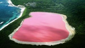بحيرة أرجنتينية تتحول للون الزهري ..  والسبب تلوث كيمياوي