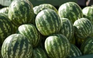 الزراعة تدافع عن البطيخ الاردني