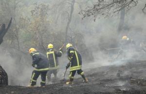 حريق محاصيل زراعية وأعشاب في مادبا وإربد