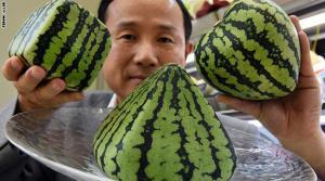 فقط باليابان ..  البطيخ بـ27 ألف دولار وحبة الفراولة بـ4 آلاف