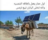 اول حمار يعمل بالطاقة الشمسية !