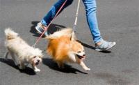 ظاهرة اصطحاب الكلاب في الشوارع تستفز الاردنيين