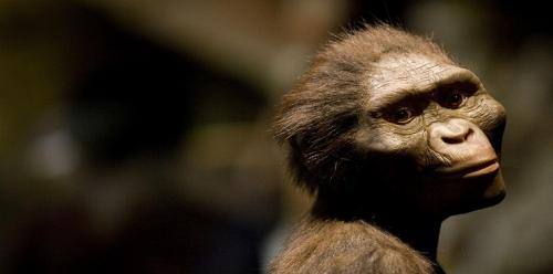 """كيف ماتت """"القردة لوسي"""" أقدم حيوان شبيه بالبشر؟ (صور)"""