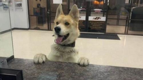 كلب يسلم نفسه لمركز شرطة بعدما تاه عن أسرة ترعاه (صور)