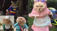 إندونيسي يصمم أزياء مثيرة للقطط!