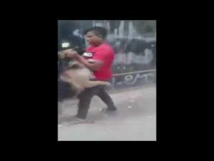 """طفل """"ينقض"""" على كلب مفترس ويشل حركته! (فيديو)"""