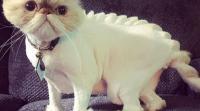 آخر صيحات الموضة للقطط الأليفة (صور)