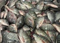 إتلاف 3.5 طن من الدواجن والأسماك الفاسدة