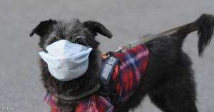 تسجيل إصابة كلب بكورونا في اربد