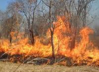 النيران تلتهم 4 دونمات حرجية في عجلون