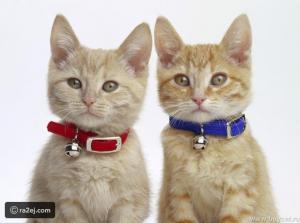 حقيقة اصابة الكلاب والقطط بالاردن بامراض خطيرة