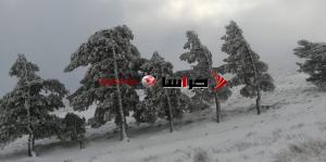 شاهد الثلوج في معان والمناطق المحيطة (فيديو وصور)