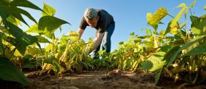 8.2 % نسبة نمو القطاع الزراعي في الربع الأول من العام