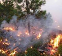 حريق يلتهم عشرات الدونمات في المزار الشمالي