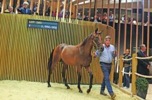 بيع حصان بمبلغ 1,55 مليون يورو في فرنسا