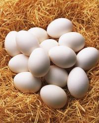"""""""نصيحة صادمة"""" ..  لا تتناول البيض يوميا"""