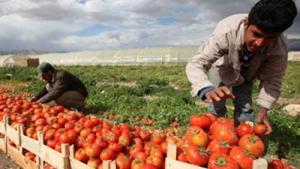 """مزارعون: """"مسلسل الخسائر"""" يدخل القطاع الزراعي في نفق مظلم"""