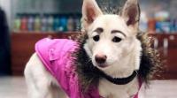 كلبة ضالة تتحول لنجمة على مواقع التواصل الاجتماعي (صور)
