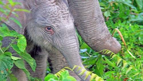 """حبوب منع حمل للرجال من """"سم الفيلة"""" !"""