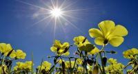 ارتفاع على الحرارة وطقس ربيعي خلال الأيام القادمة